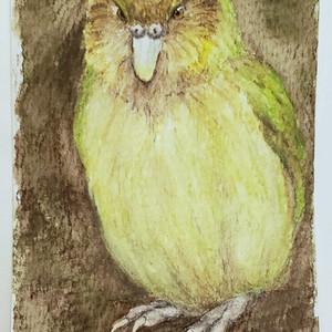 #94 Kakapo