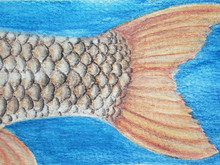 #229 Orange-finned Humpback Mahseer