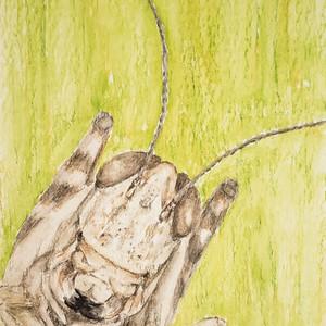 #272 Central Valley Grasshopper