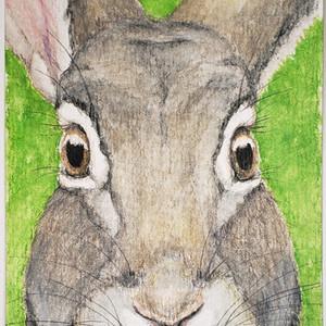 #170 Riverine Rabbit