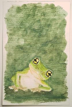 #121 Gunther's Bush Frog