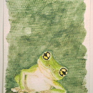 #121 Günther's Bush Frog