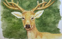 #31 Schomburgk's Deer