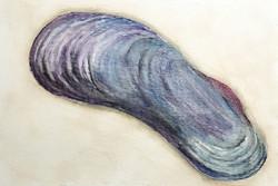 #252 Horikoshi's Giant Mussel
