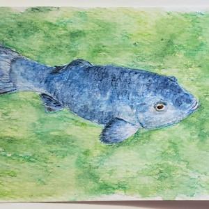 #82 Devil's Hole Pupfish