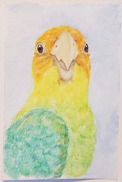 #105 Carolina Parakeet