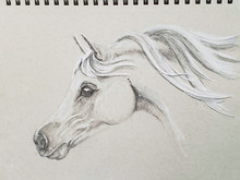 Intermission - Horse