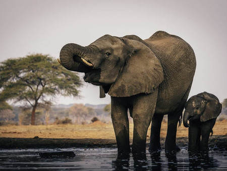 Cientos de elefantes mueren misteriosamente en Botswana