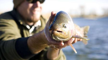 Enfermedad desconocida en California mata miles de peces