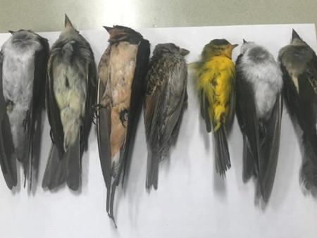 Investigan mortandad masiva de aves migratorias en Nuevo México