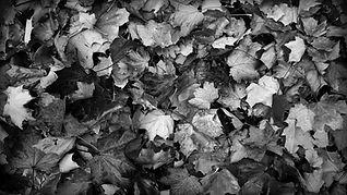 Leaves - Fall BW.jpg