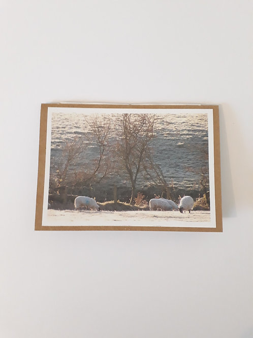 Sheep Grazing Frosty Morning Greeting Card Handmade Visit Hodder Valley