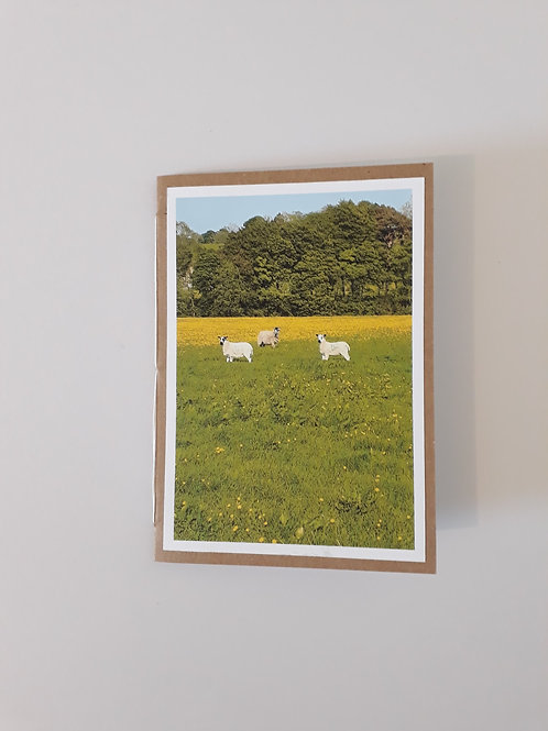 3 Little Sheep In A Meadow Greeting Card Handmade Visit Hodder Valley