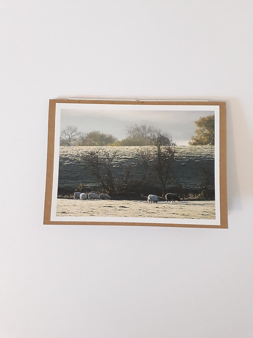 Sheep Grazing On A Frosty Morning Greeting Card Handmade Visit Hodder Valley