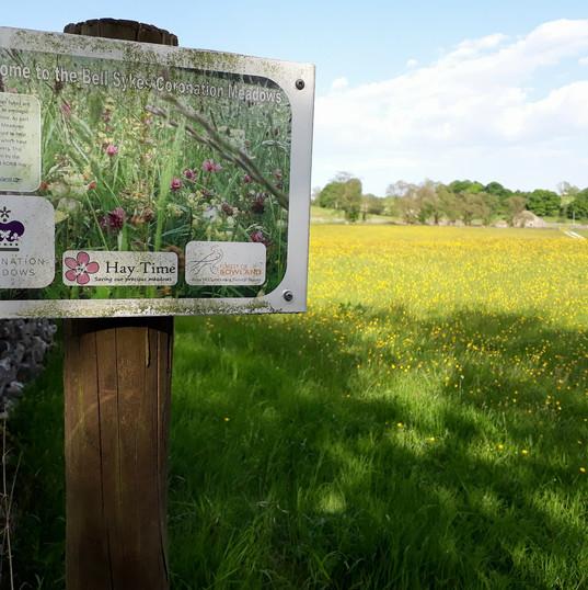 Sykes Farm Coronation Meadow.jpg