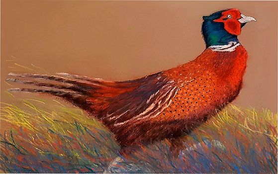 Rex Pheasant v8 - squashed.jpg