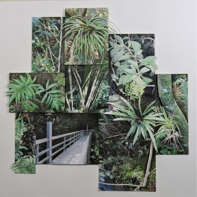 Deborah Perlman - Fern Forest -.jpg