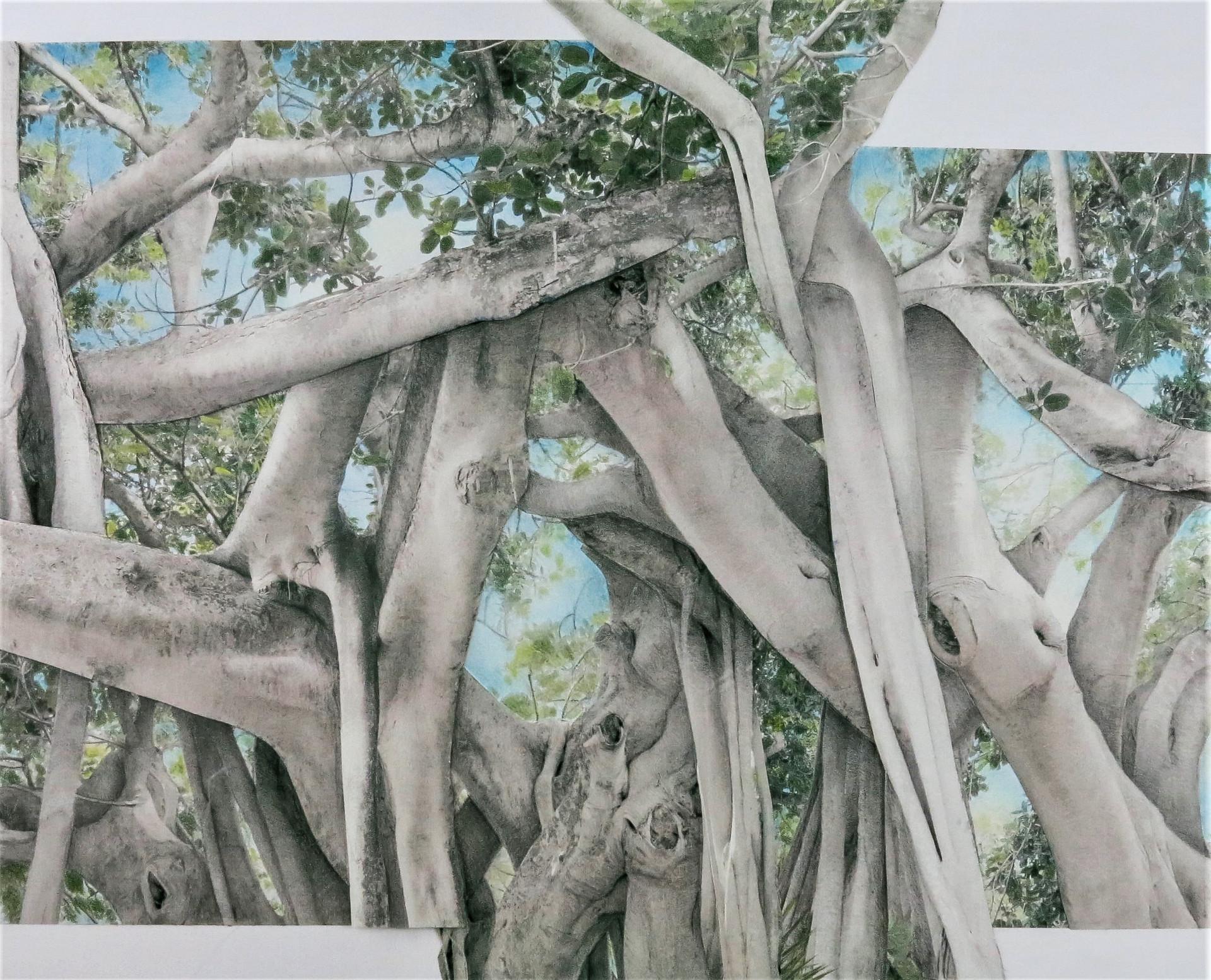 Banyan Canopy 100