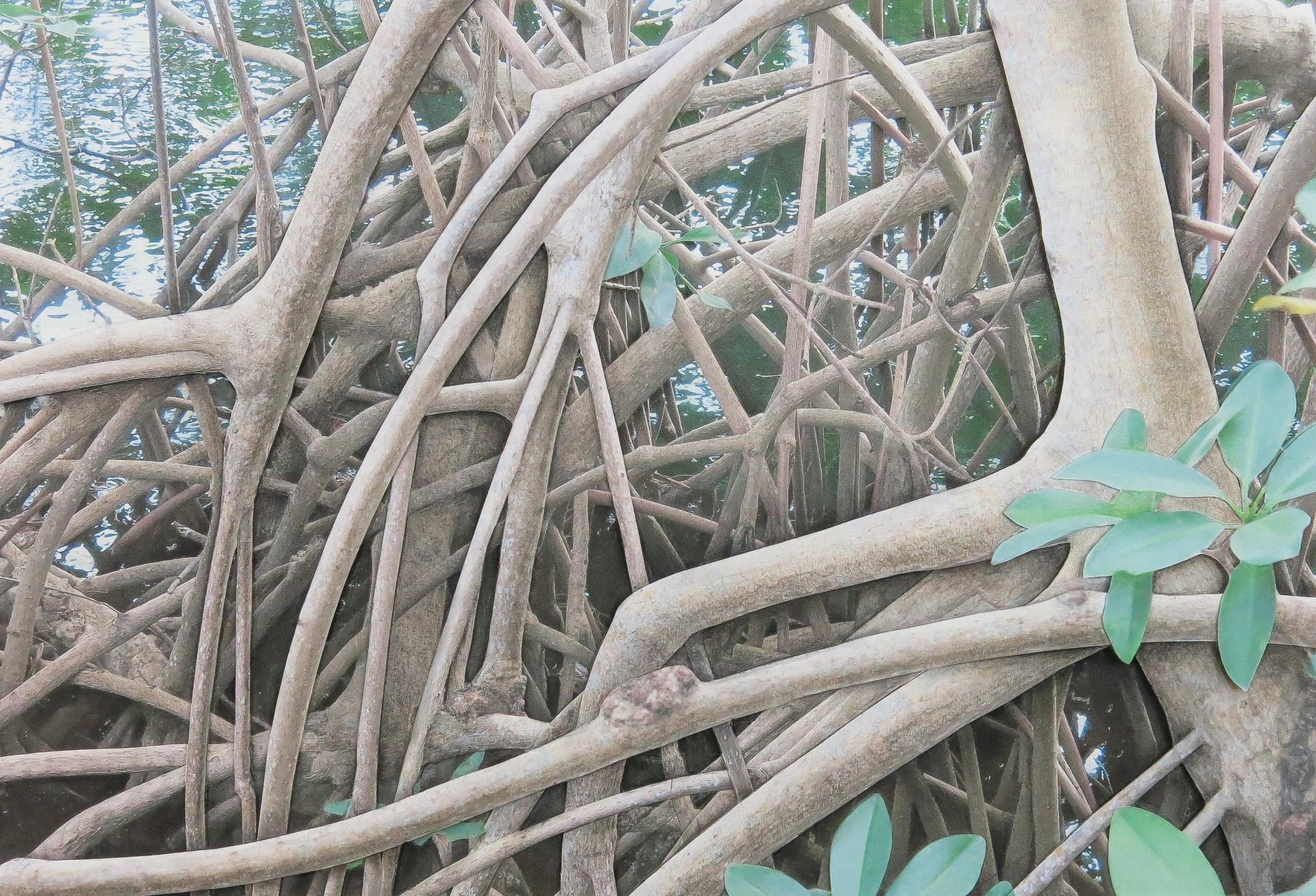 Mangrove 200