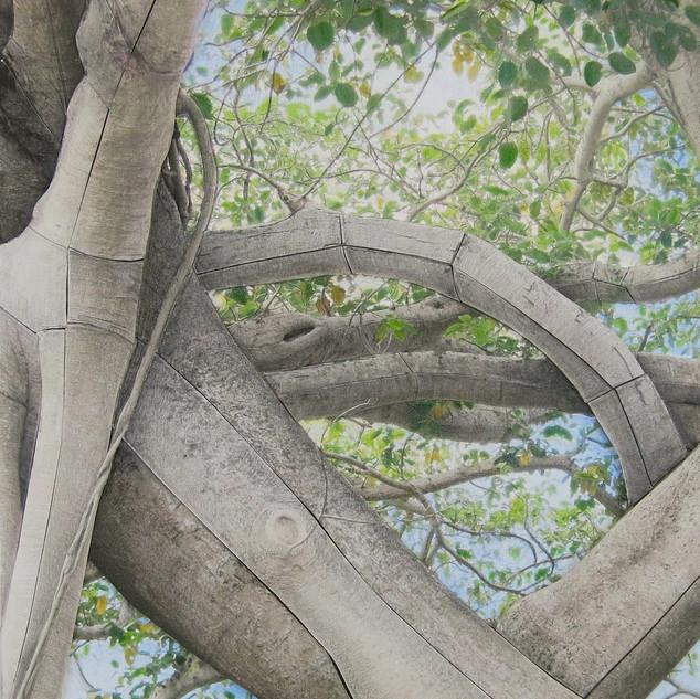 Deborah Perlman - Banyan Study 300.jpg