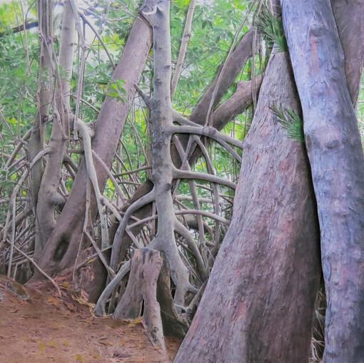 Deborah Perlman - Mangrove and Pines.jpg