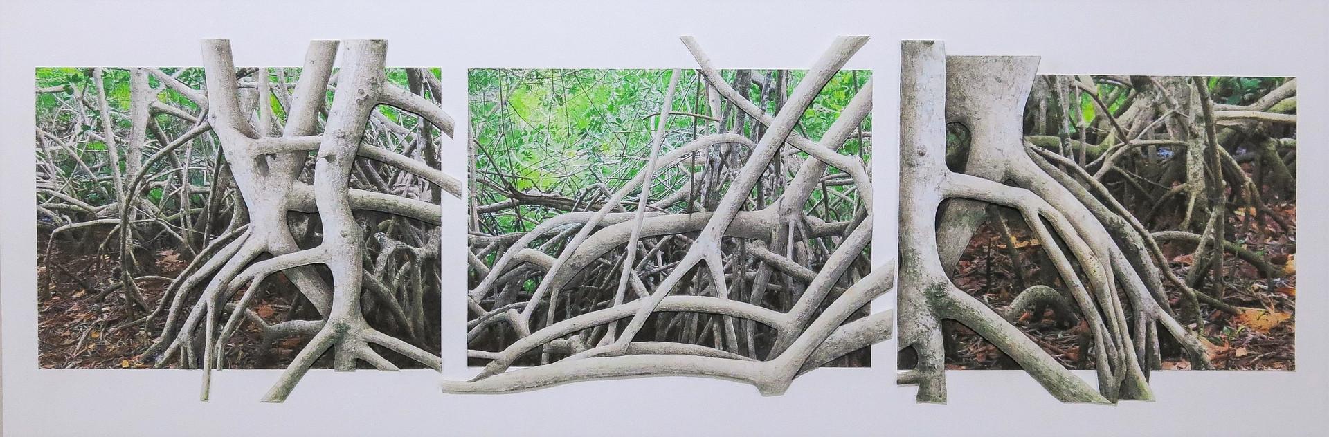 Mangrove Triptych
