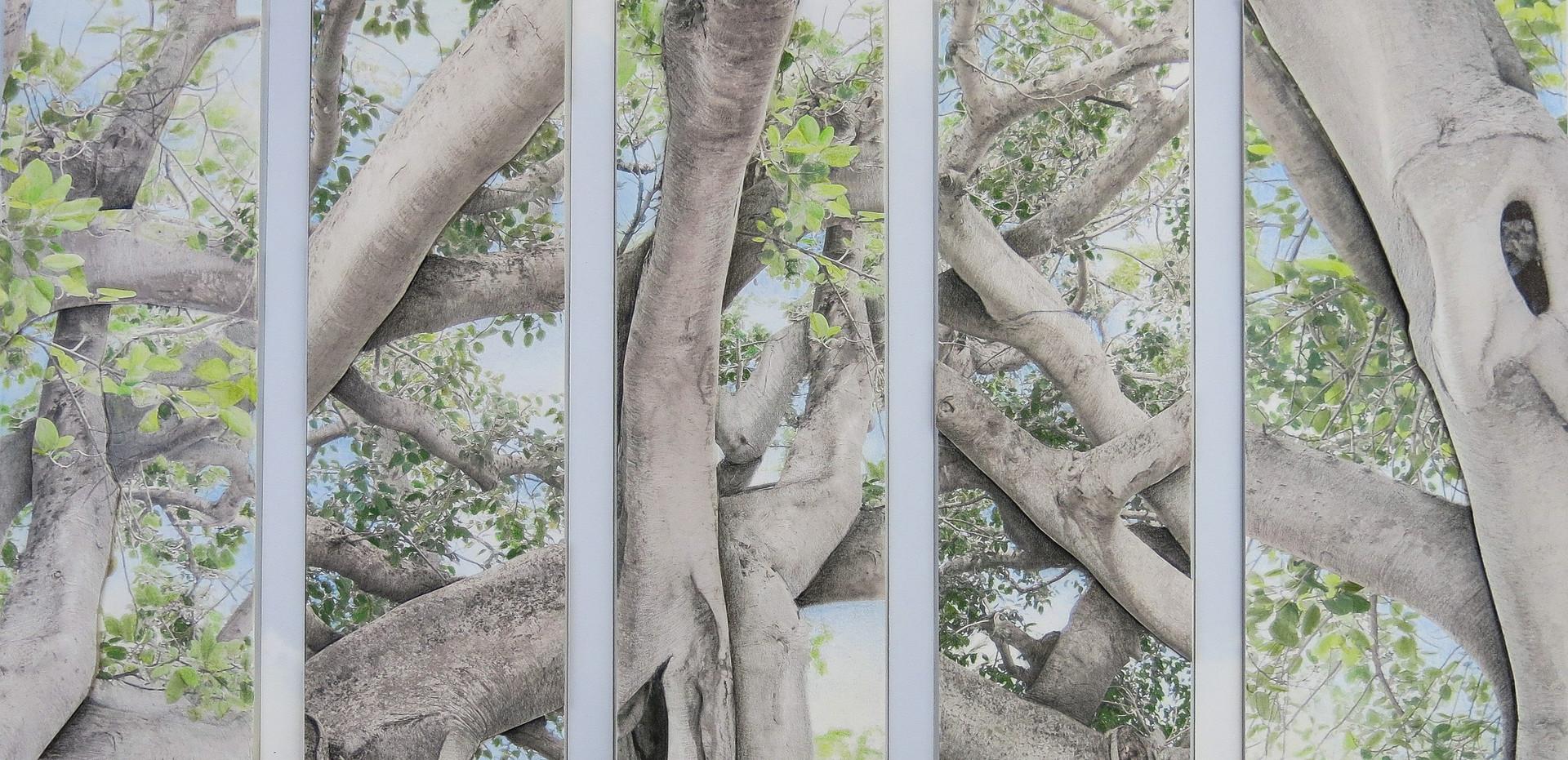 Banyan Canopy 300