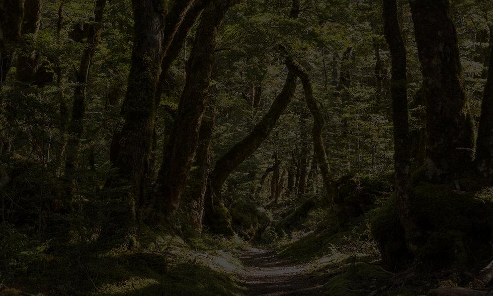 trees PSD.jpg
