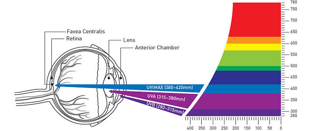 Blue-light-in-the-visible-ray-spectrum (