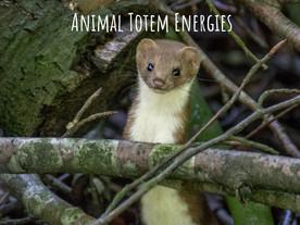 Sept 2018 energies ~ Weasel animal totem