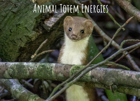 Sept 2018 energies ~ Weasel animal totem