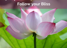 5 Ways to drop the drama and follow your Bliss