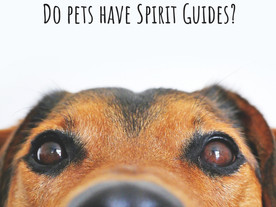 Spirit Guides for Pets?