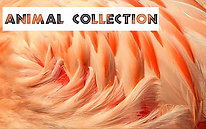 Animal Shop Thumbnail.png