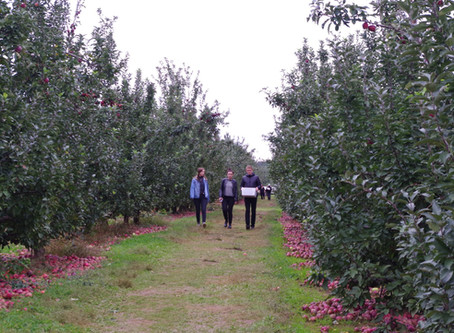 Apple Picking at Linvilla Orchards!