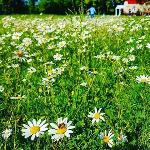 Biodiversität in Birsfelden