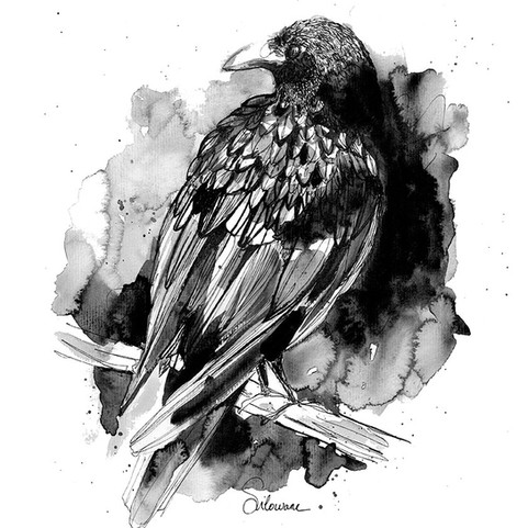 Illustration-corbeau