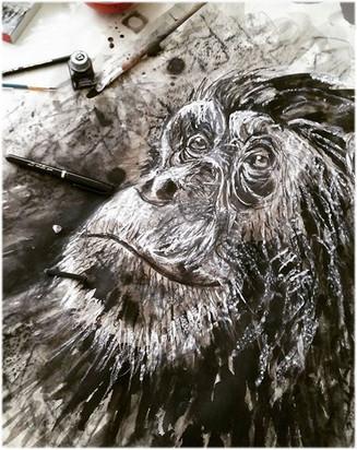 illustration-singe-silowane