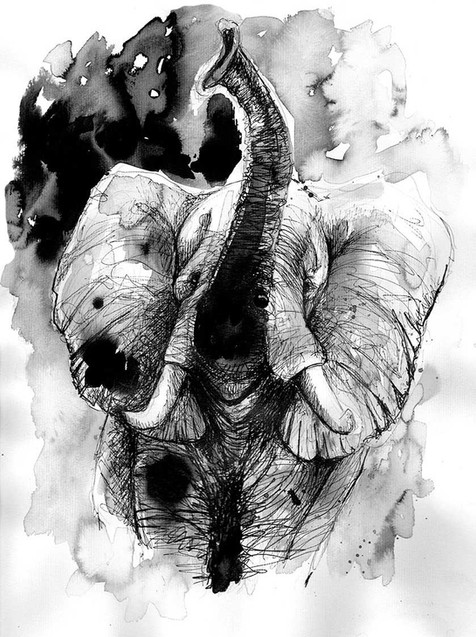 elephant illustration silowane