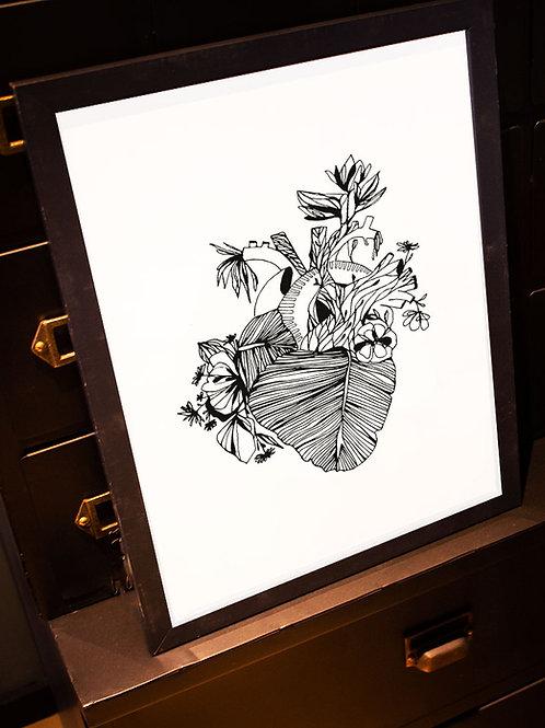 illustration bananier cadre