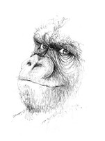 illustration silowane gorille
