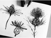 illustration-croquis-plantes-silowane