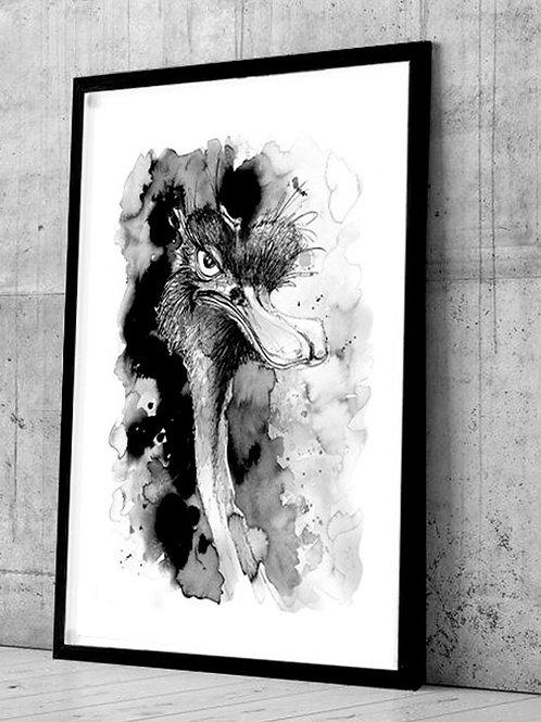 affiche autruche - illustration encre silowane