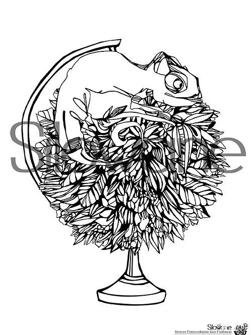 coloriage mappemonde - illustration Silowane