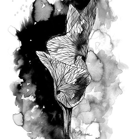 Illustration-eclosion