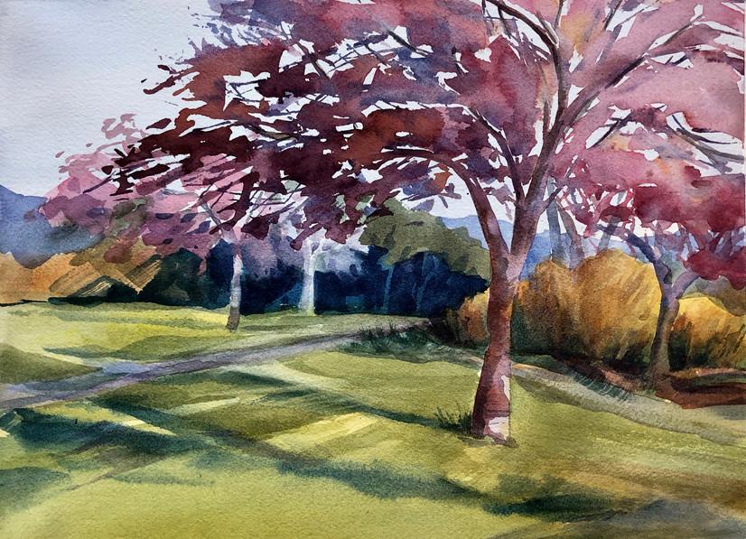 Colors of Magnuson Park