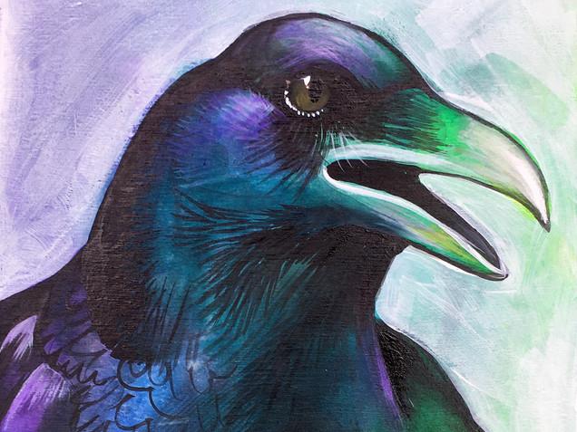 Drama Lama Crow
