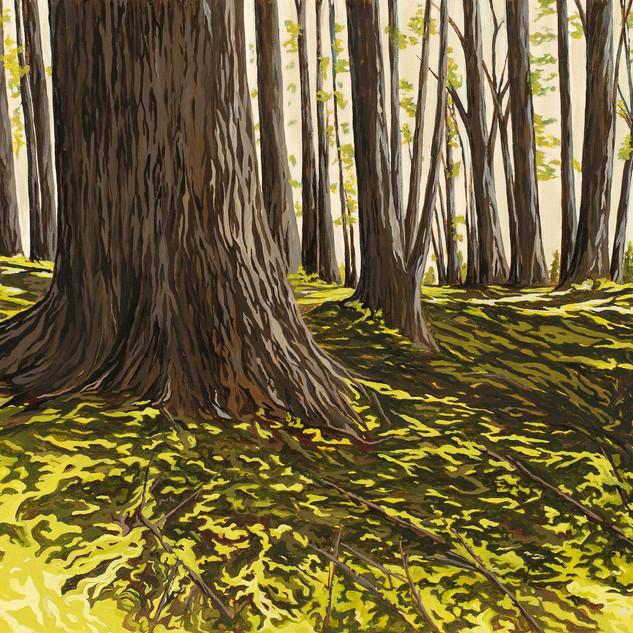 Schoodic Woods