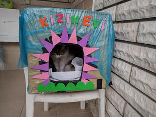 Kış için Kedi Evi
