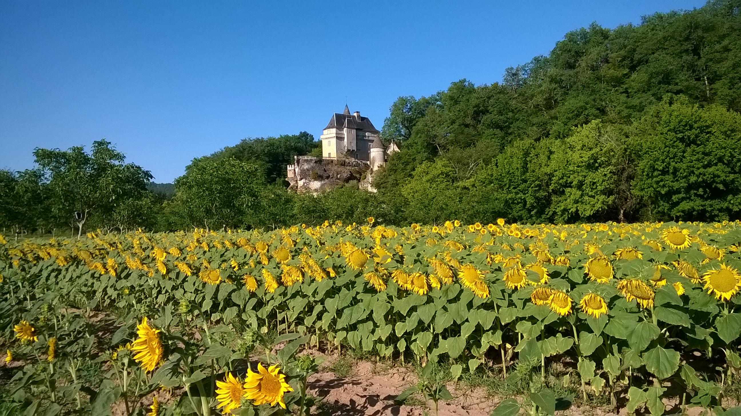 Chateau de Belcayre in Summer